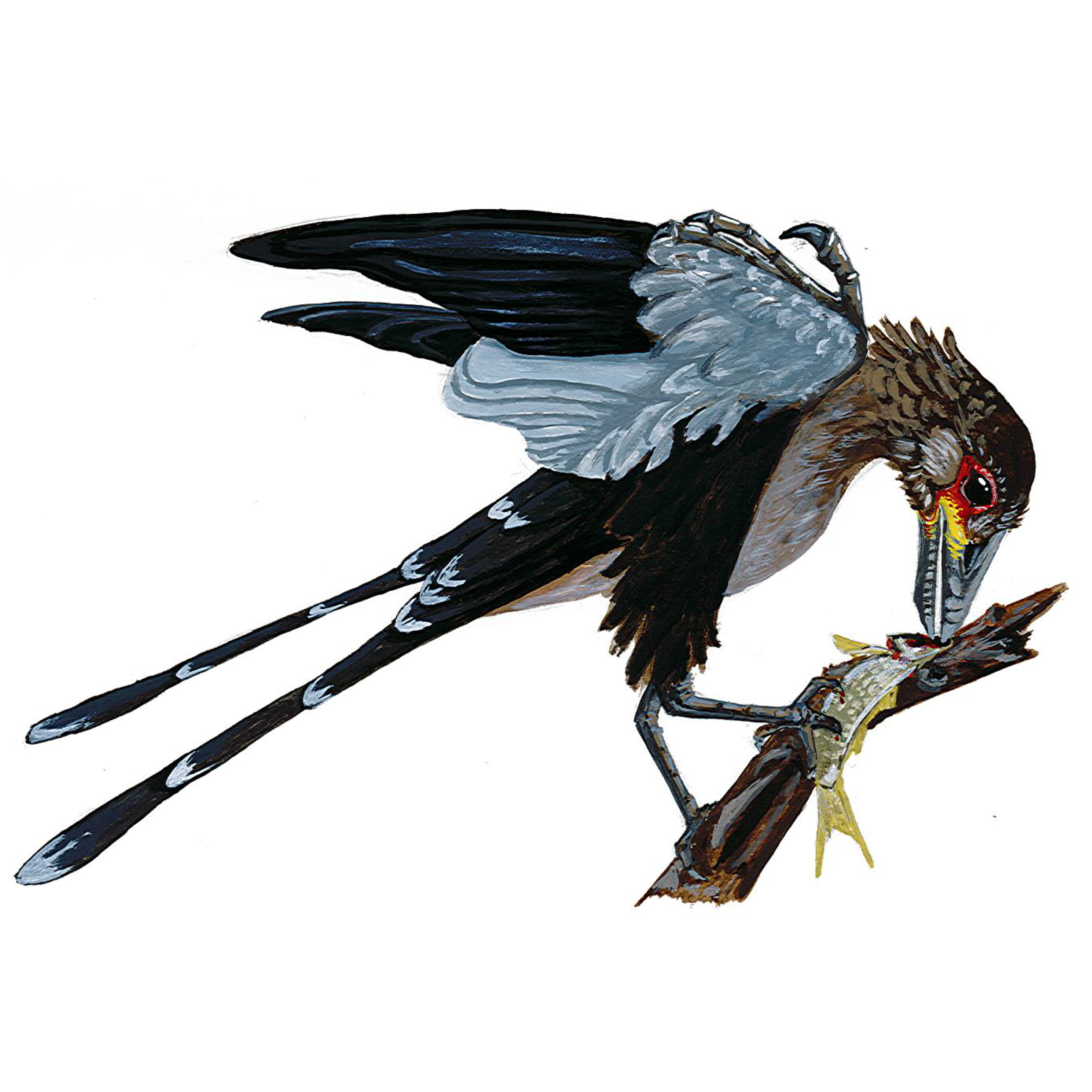 the modern bird a descendant of How dinosaurs shrank and became birds modern birds appeared to emerge in a snap of evolutionary time but new research illuminates the long series of evolutionary changes that made the.