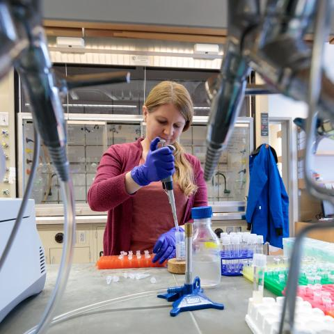Scientist works in lab holding pipette