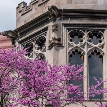 UChicago campus with spring flowers