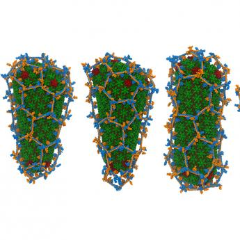 five images of differently-shaped proteins encased in hexagonal nets