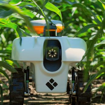A TerraSentia robot—which automates the measurement of crop phenotypes—moves between rows of corn.