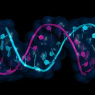 Two twining strands of RNA in different colors
