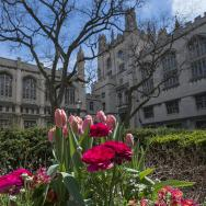University of Chicago campus in spring